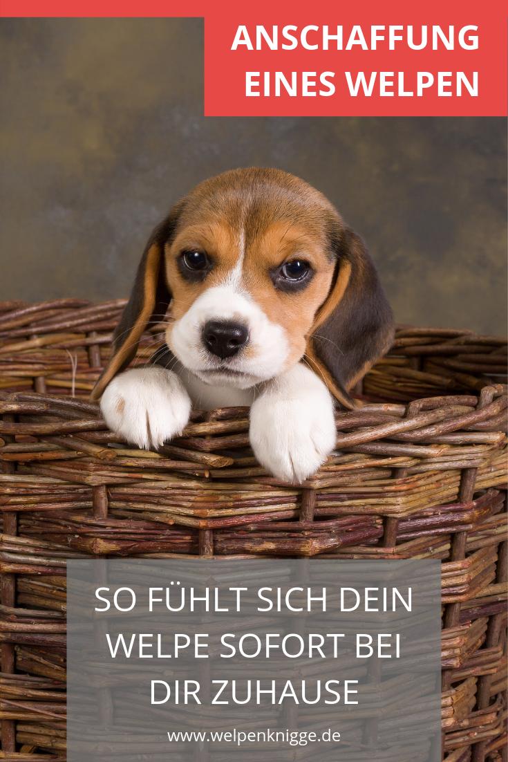Das Neue Zuhause Hundegerecht Gestalten Welpen Welpen Kaufen Hunde