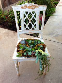 It's all here: Succulent Designs