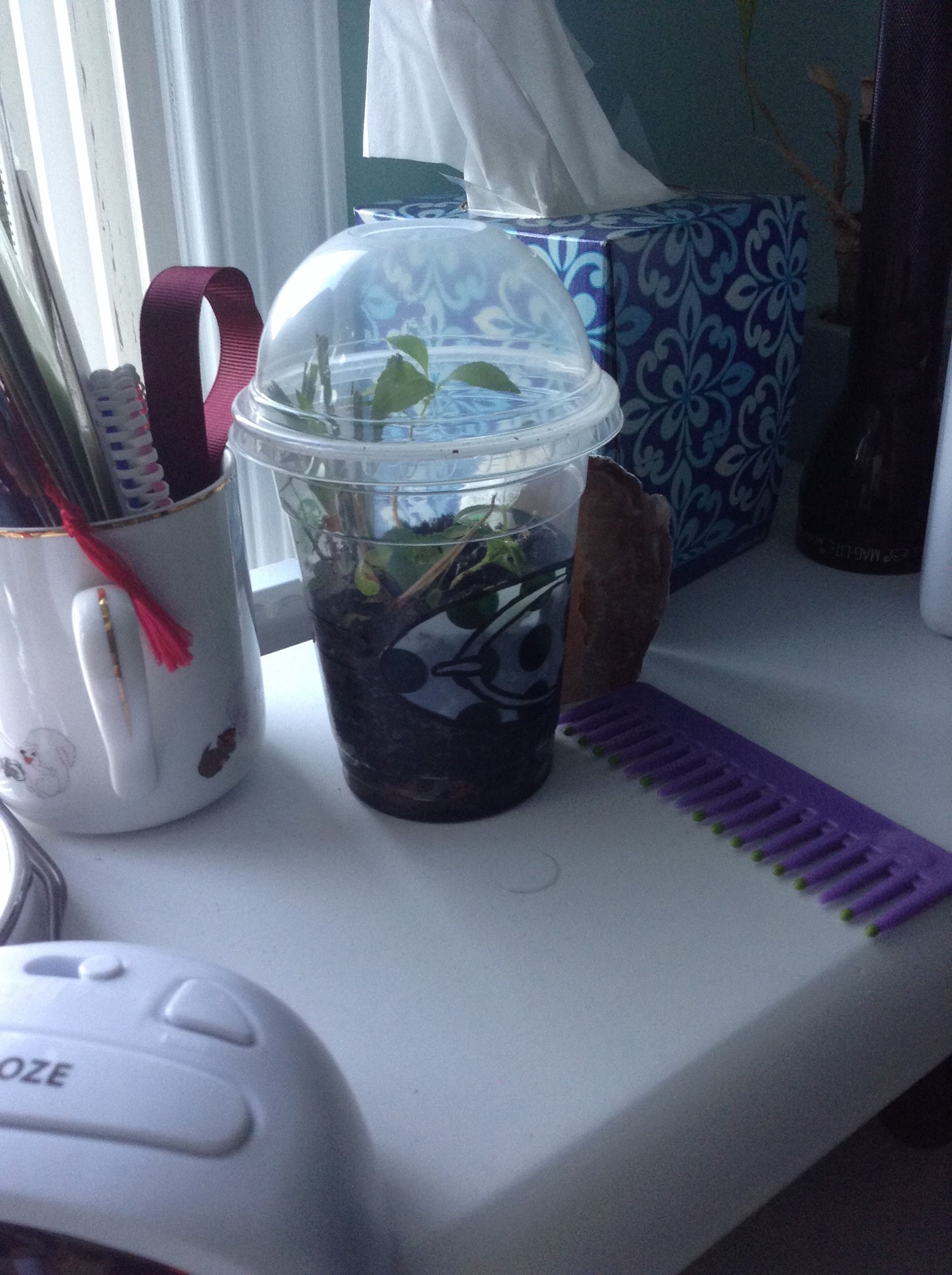 Made this from a frap cup... Literally went outside and picked some weeds and planted them in my cup ^_^