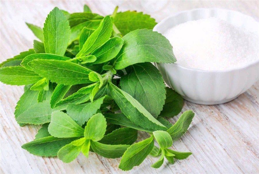 سكر ستيفيا الطبيعي عديم السعرات الحرارية Medicinal Honey What Is Stevia Stevia