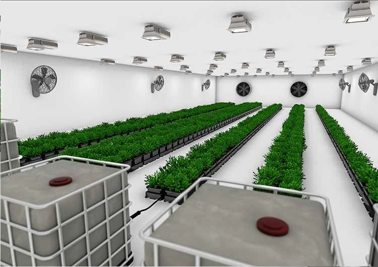 4 Tips For Buying The Right Kind Of Grow Pots For Your 400 x 300