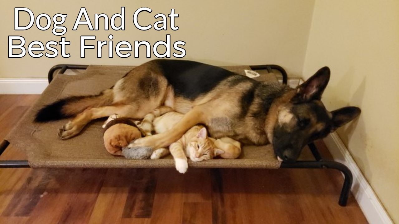 How A German Shepherd And A Kitten Became Best Friends Kittens