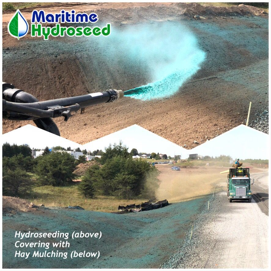 Hydroseeding Is Covered With Hay Mulching The Hay Is Then Covered With A Binder Glue To Hold In Place And For Erosion Control Mulching Improvement Projects