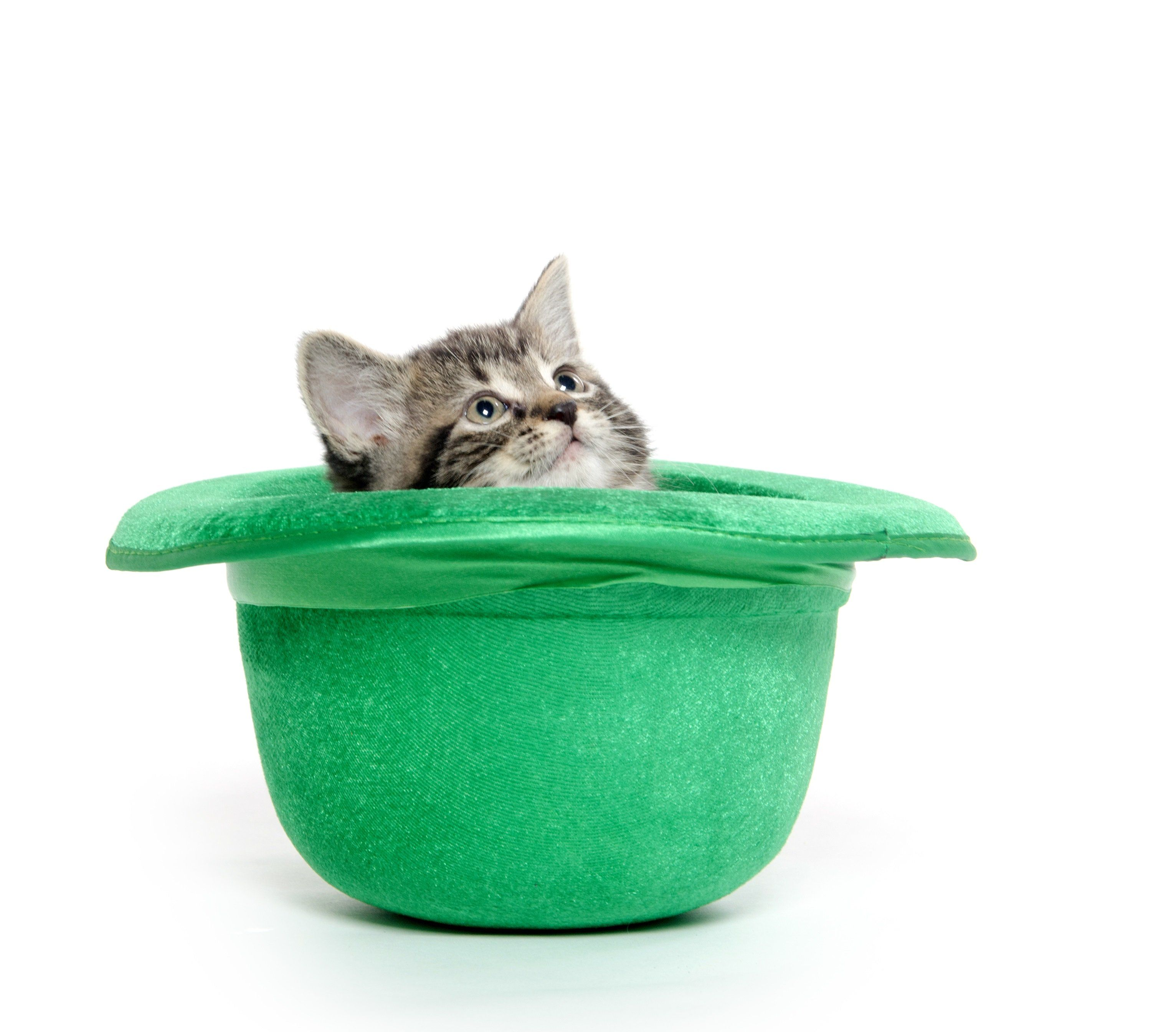 Saint Patrick S Day 10 Cute Cats Who Are Going Green Pictures Cattime Cats Funny Cat Pictures Cat Safe