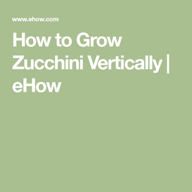 How To Grow Zucchini Vertically Growing Zucchini 400 x 300