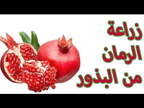 زراعة الرمان من البذور 1 Youtube Fruit Apple
