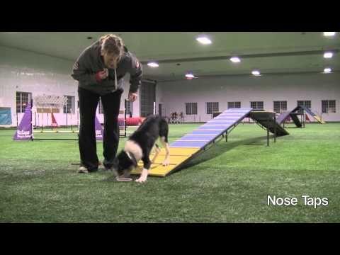 Dog Agility Training: Grand Slam 15 Months - YouTube