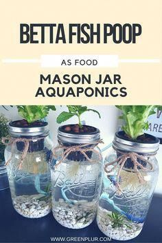 Aquaponics Aquaponics, Fertilizer for plants, Herbs indoors