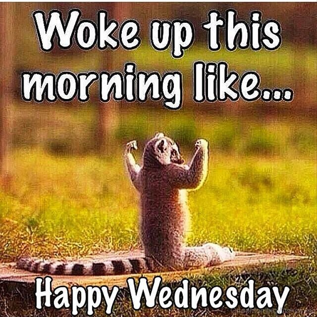 Happy Wednesday Peeps Wishing You All A Wonderful Day Good Morning Funny Funny Wednesday Memes Good Morning Wednesday