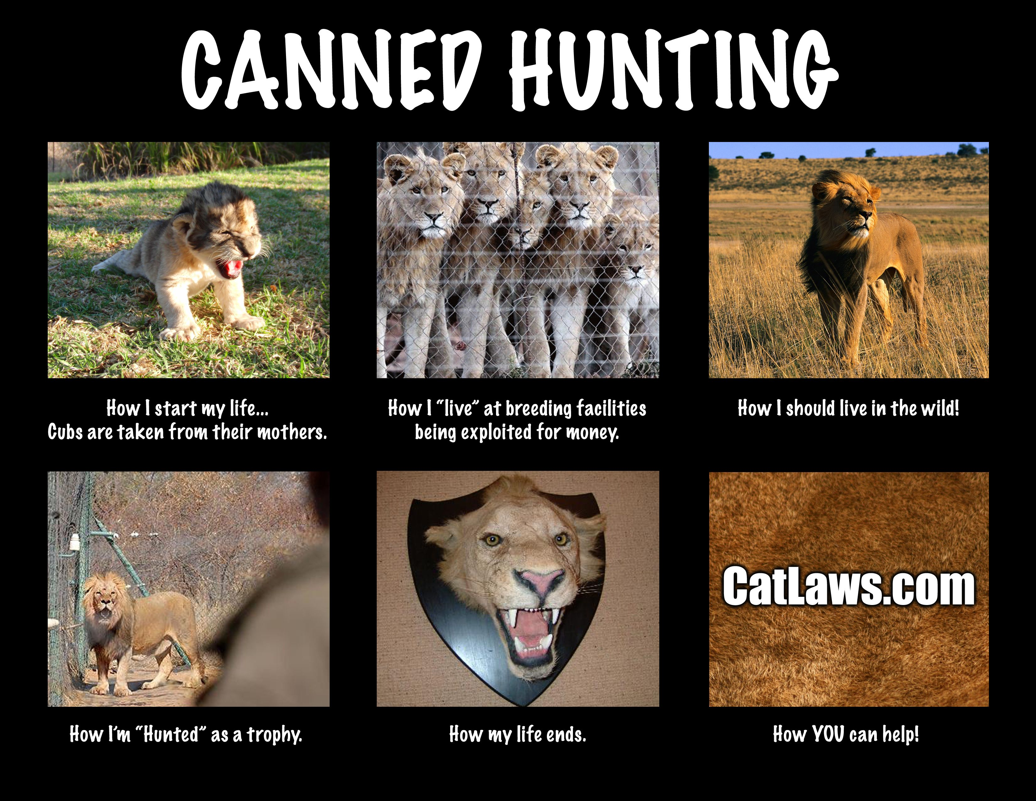 Stop Canned Hunting  15 Countries 62 Cities And