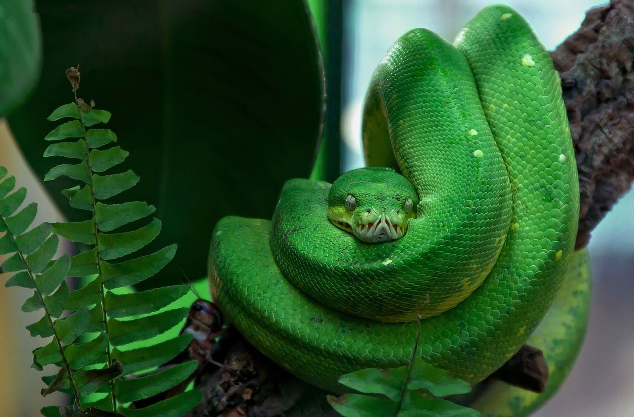 Pin By Beth Brooks On Portrait Illustration Snake Images Green Aesthetic Cute Reptiles