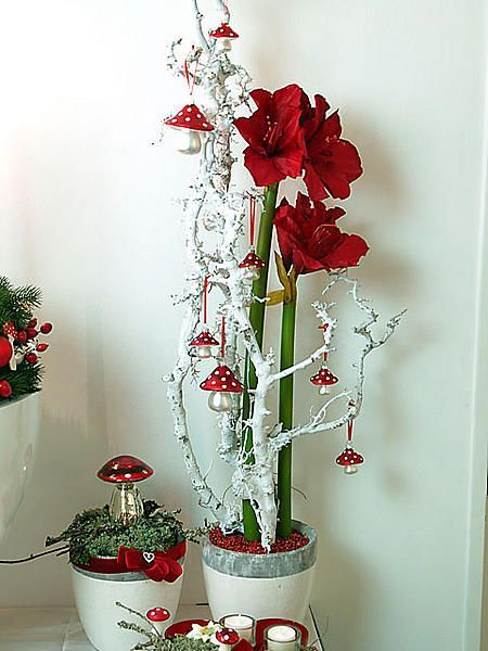 Pin by margarete pitschel on weihnachtsfest pinterest xmas craft and xmas flowers - Amaryllis dekorieren ...