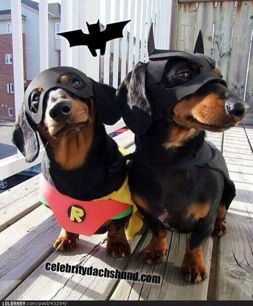 Very Cute Batman Robin As Tweeted By Robin S Windsor