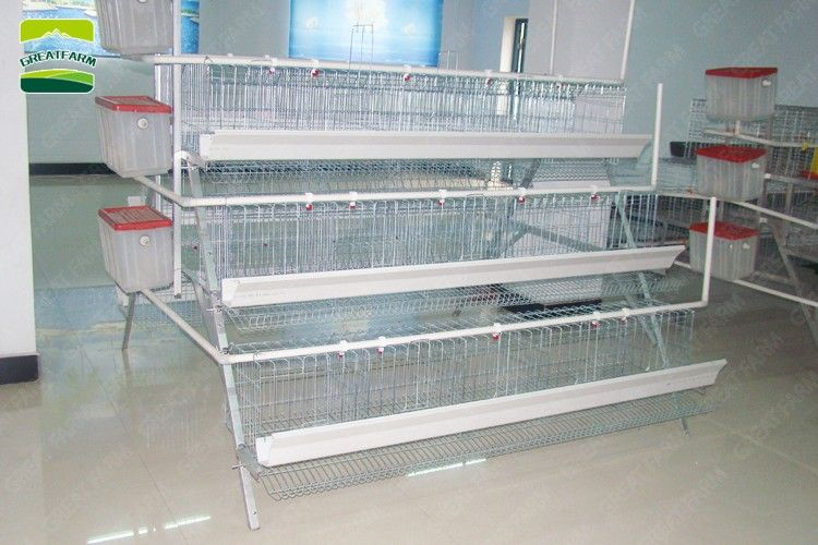 GREAT FARM Egg Layers Cage Design Chicken cages, Cages