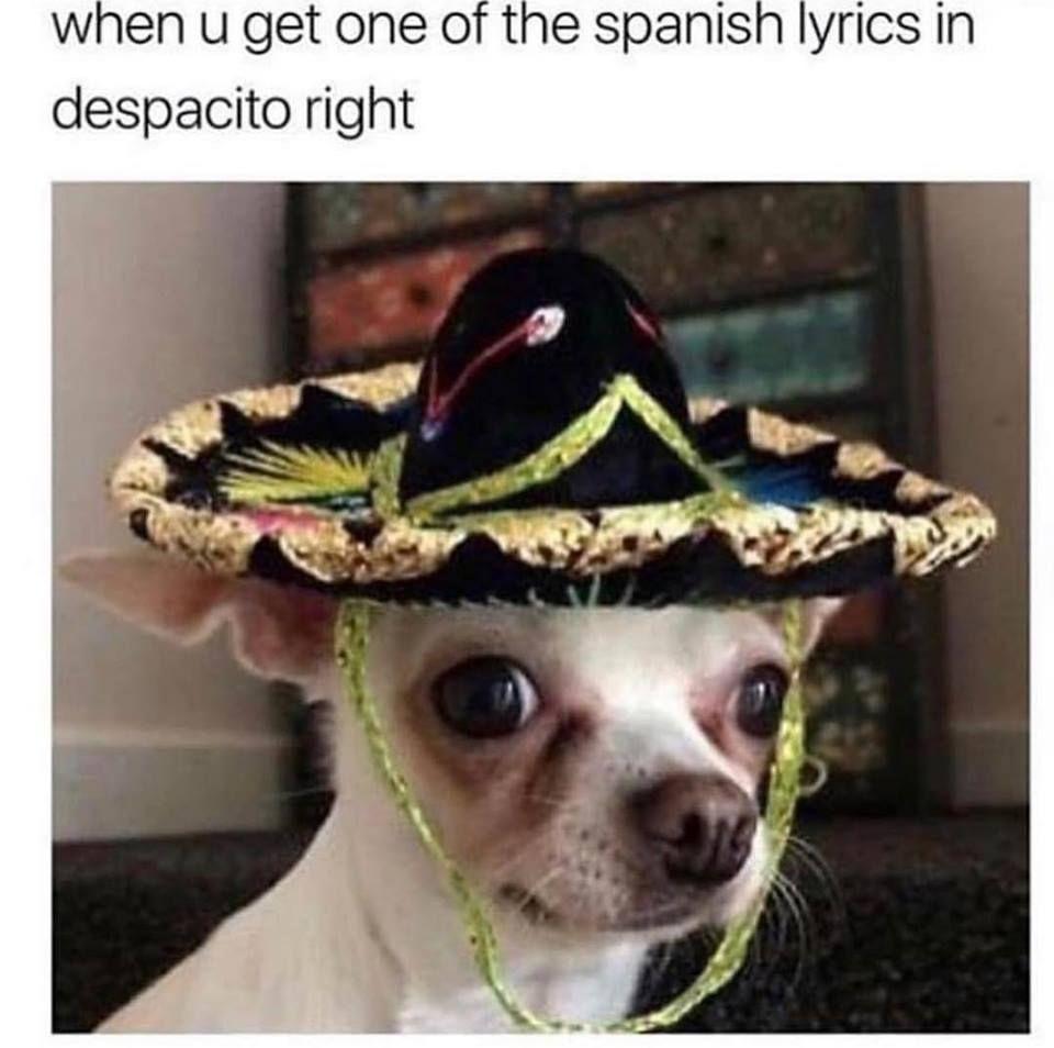 Despacito Spanish Funny Memes Cheezburger Cat Memes