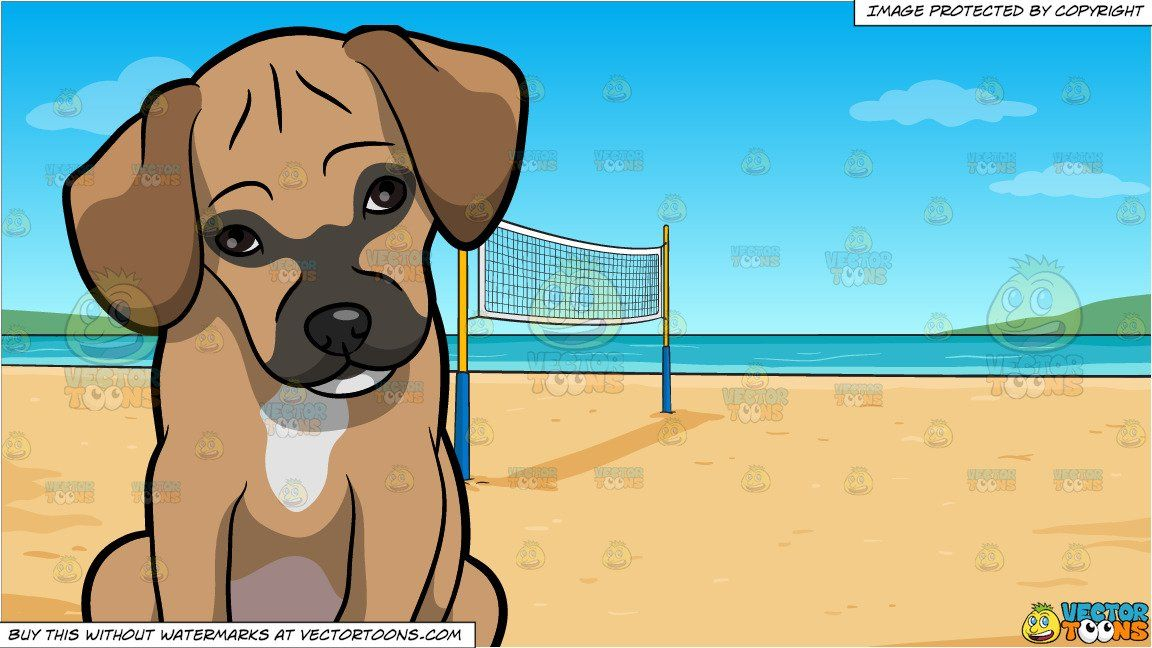 A Shy Puggle Dog And Beach Volleyball Background With Images Puggle Dogs Volleyball Backgrounds Beach Volleyball