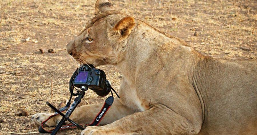 5 formas de perder tu cámara 'a lo grande' y para siempre