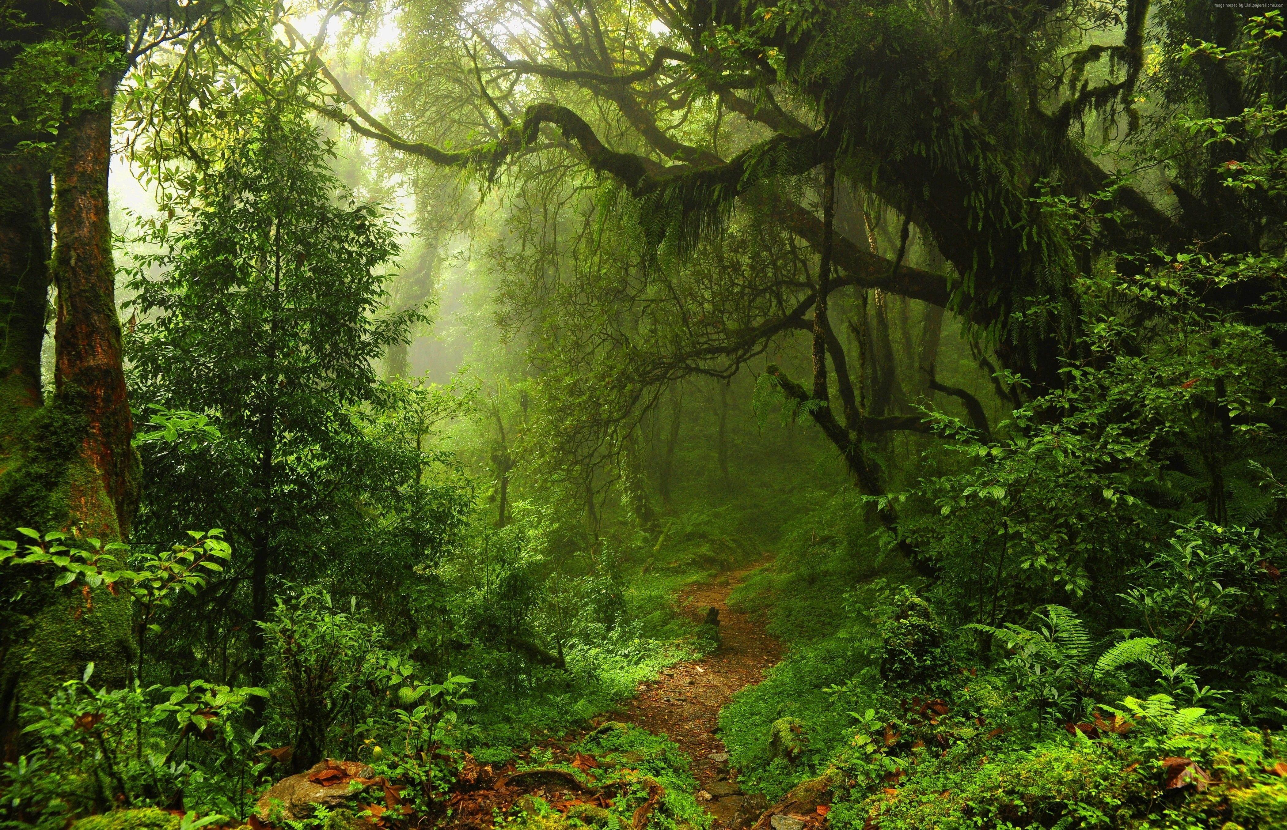 Trees Leaves 4k Summer Forest Grass Green 5k 4k Wallpaper Hdwallpaper Desktop In 2021 Landscape Oil Painting Landscape Photo