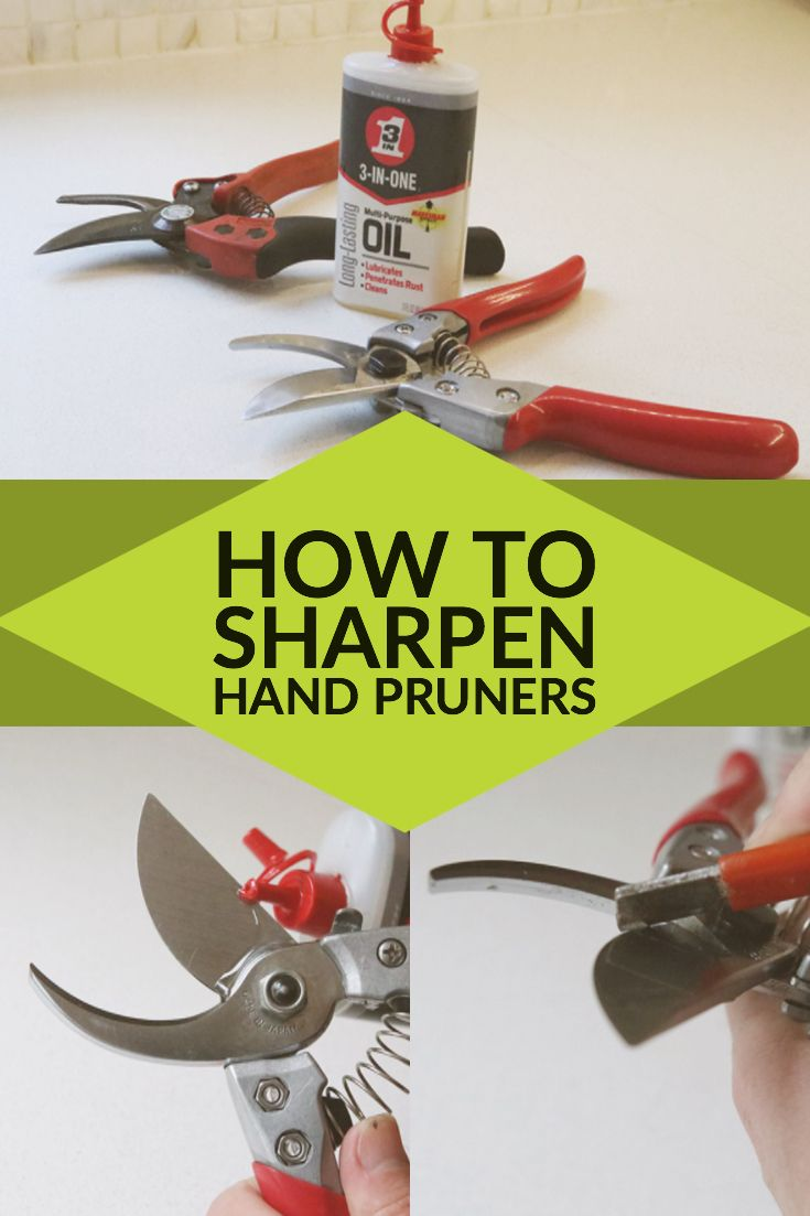 Communication on this topic: How to Sharpen Pruning Shears, how-to-sharpen-pruning-shears/