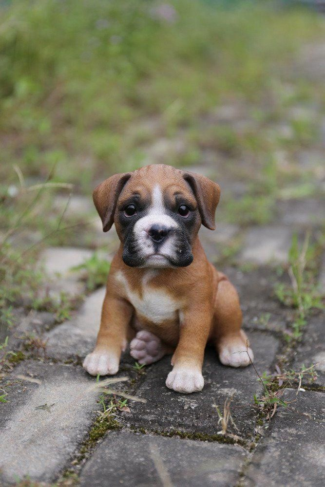 Dog Paw Hot Spot Doxie Puppies Dog Litter Lhasa Apso Dogs Boxer Puppy Easiest Dogs To Train Boxer Dogs