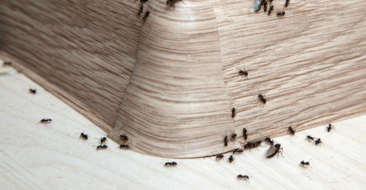 d barrassez vous des fourmis autour et dans la maison en une seule nuit diff rents trucs. Black Bedroom Furniture Sets. Home Design Ideas