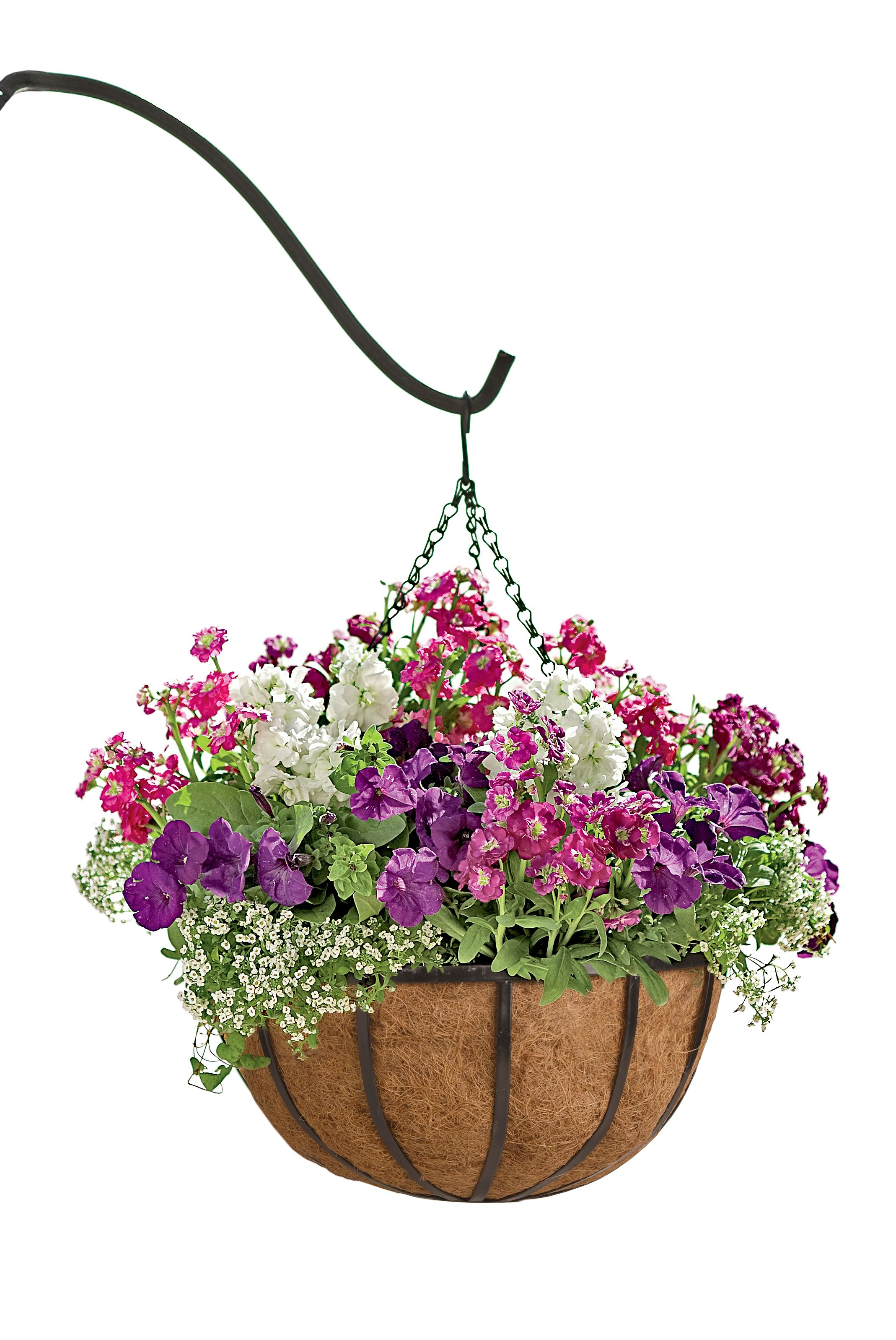 Flower Baskets Photos : Hanging flower baskets