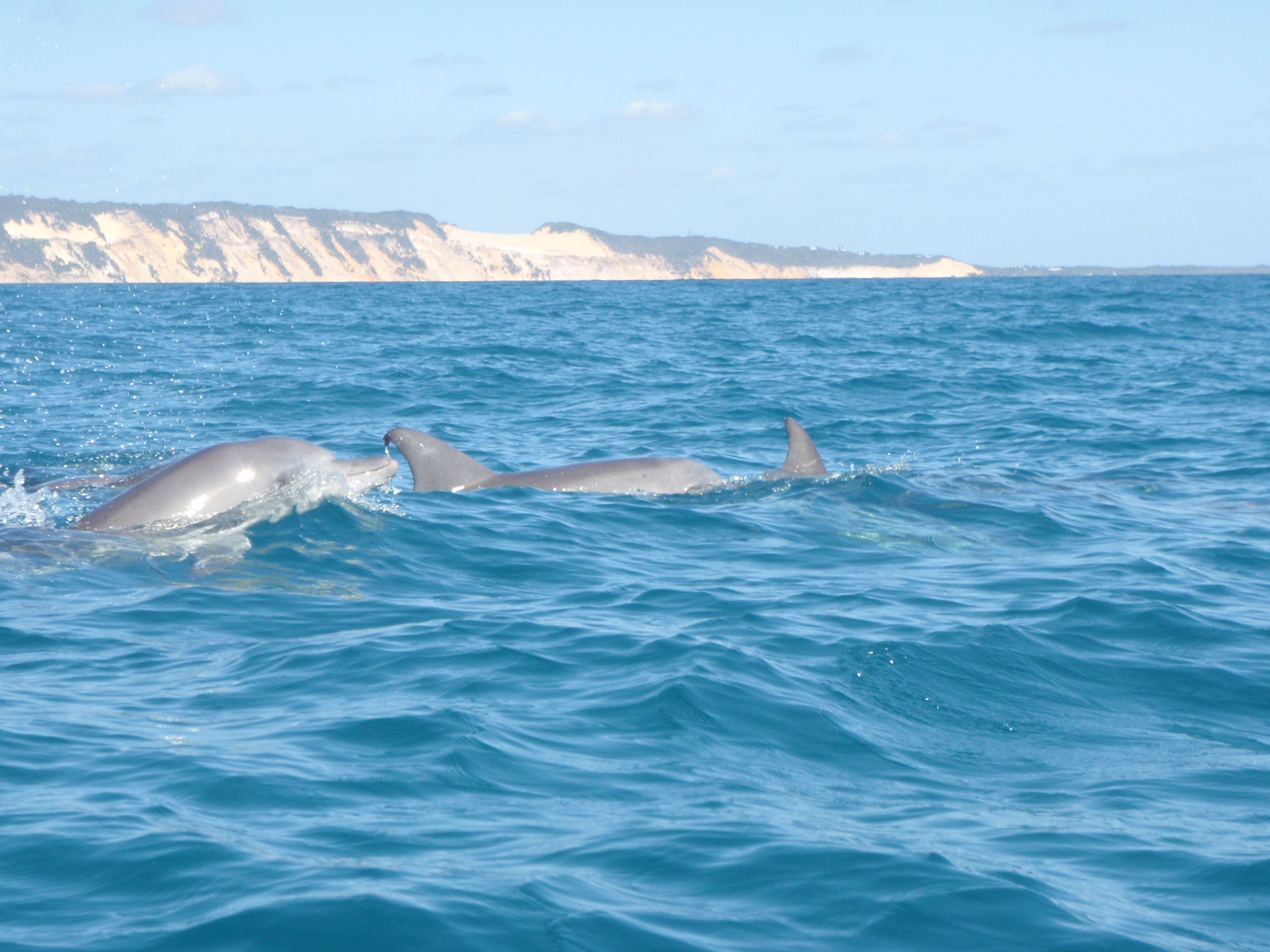 Rainbow Dolphin - Bing images