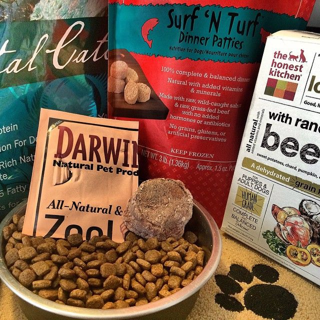 What am I eating this month you ask? Oh well, a daily mixture of @honestkitchen dehydrated beef dog food, Stella & Chewys raw Surf and Turf patties, Earthborn's Coastal Catch kibble and Darwin's raw dog food diet. #dogfood #healthypet #dogs #dogsofinstagtam #grainfree #darwinspet #stellaandchewys #earthborn #holisticpet #kibble #rawdogfood #dehydrateddogfood #petnutrition #happypets