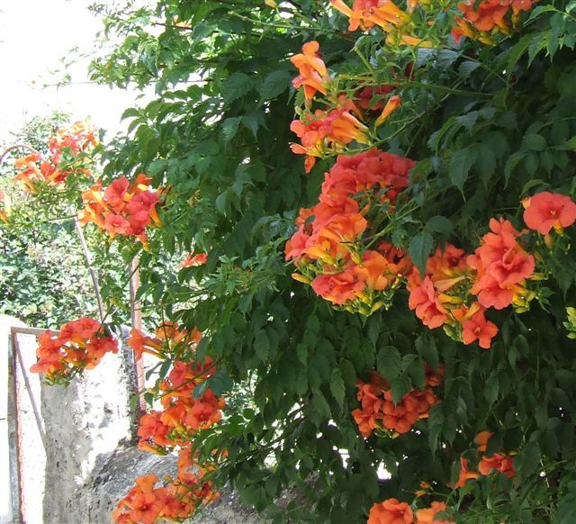 roof planting serene sun house | pen's blog: Sun loving container plants for roof garden ...