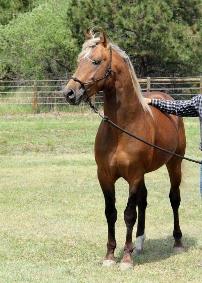 Link Bracelet Ponies Great gift for people who love Horses Mustang Bracelet Rearing Horse