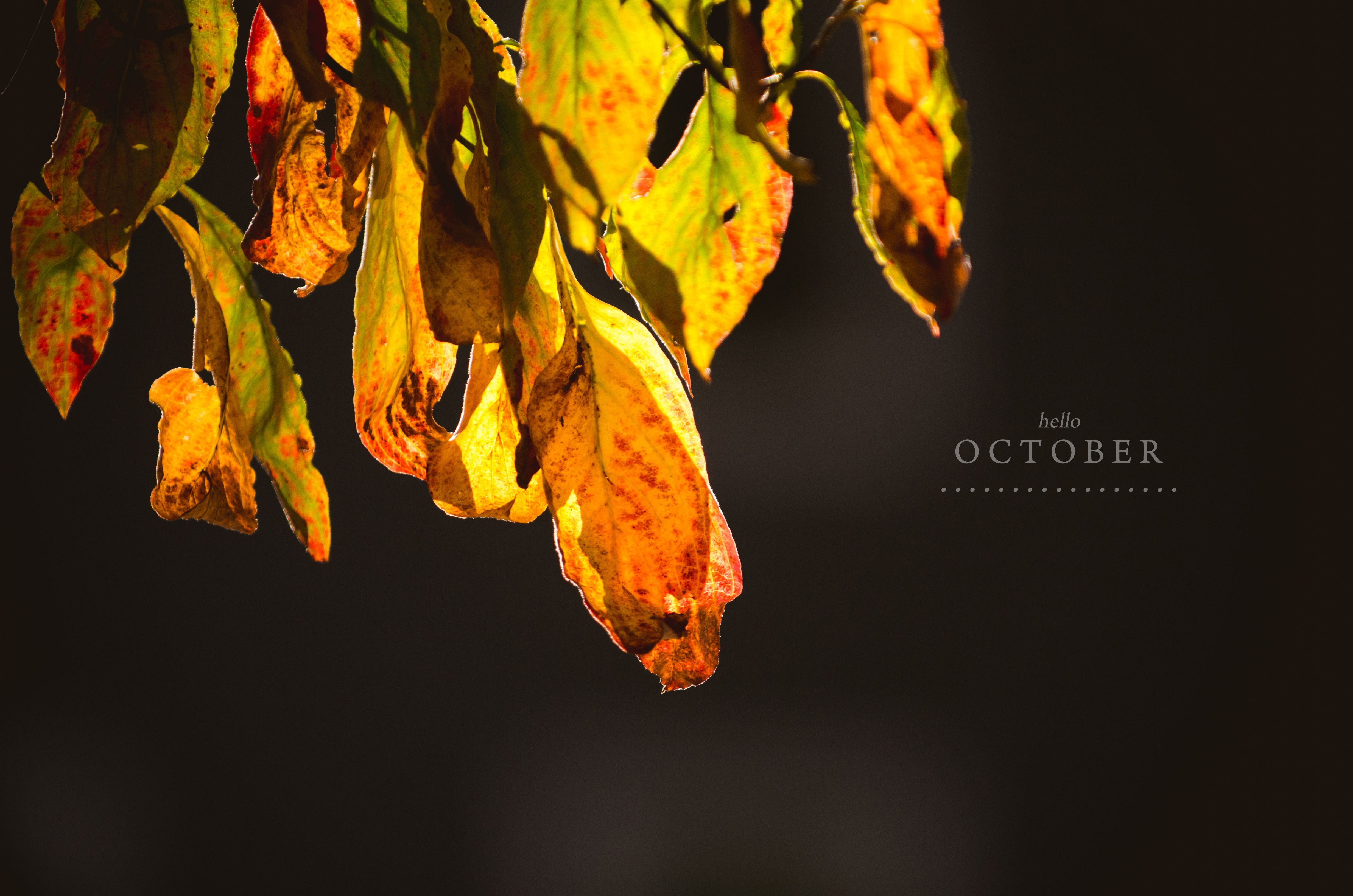 October Hello photography pictures exclusive photo