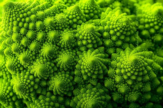 Patterns In Nature Mathematical Concepts In Nature Fractals