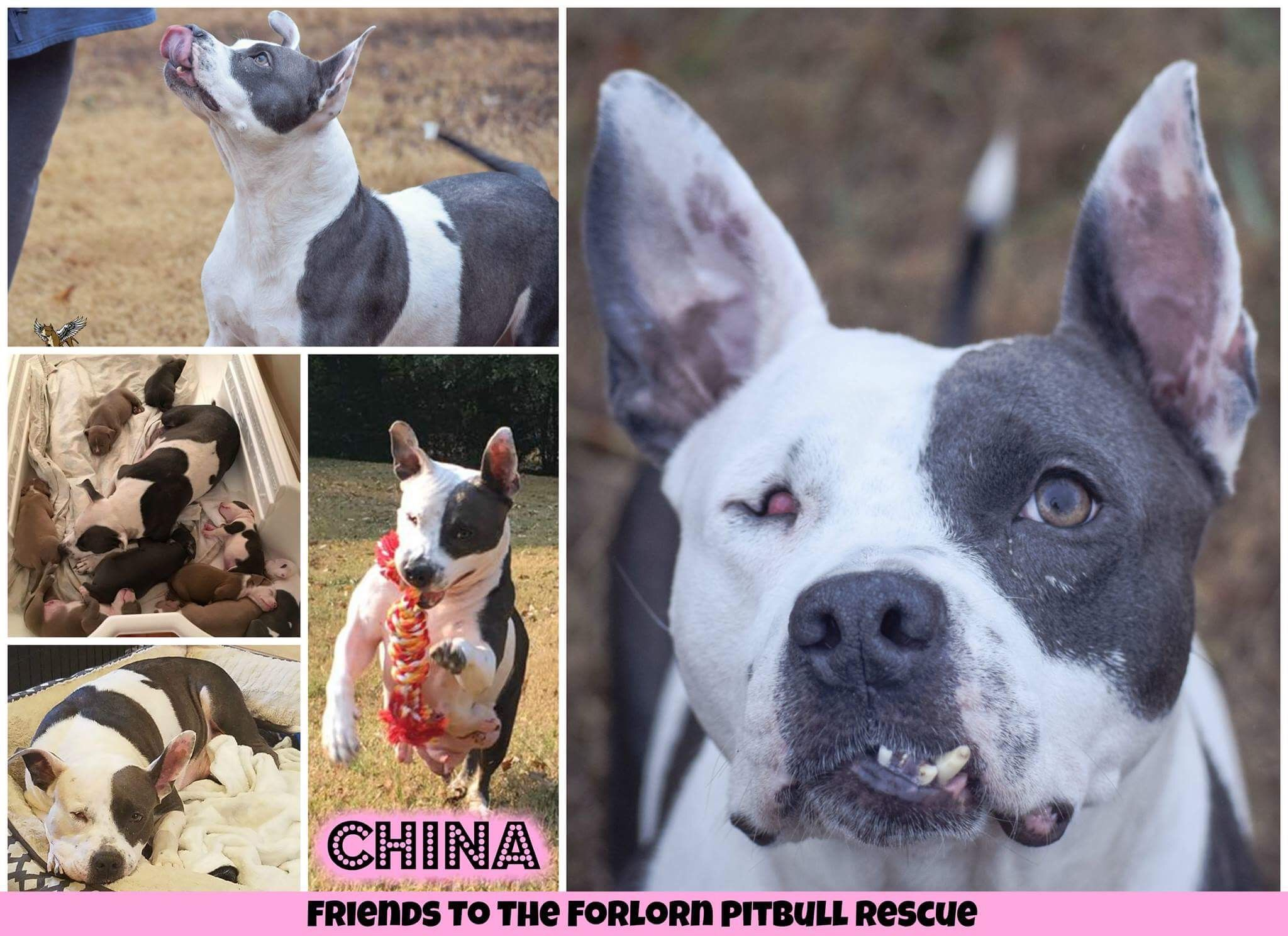 Beautiful China Is An Adoptable Dog Thru Friends To The Forlorn