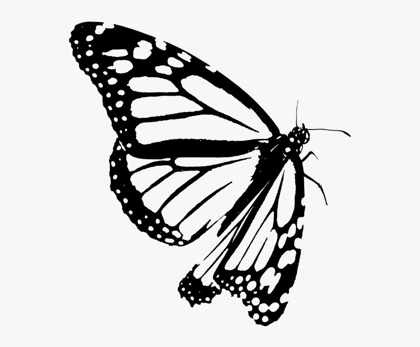 Google Image Result For Https Www Pngitem Com Pimgs M 426 4268495 Monarch Butterfly Clipart Blac Butterfly Clip Art Clipart Black And White Butterfly Outline