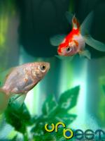Quem vive em Lisboa já sabe onde encontrar tudo para o seu aquário. http://www.na-casa.pt/index.php/lisboa/animais-de-estimacao/aquarios.html