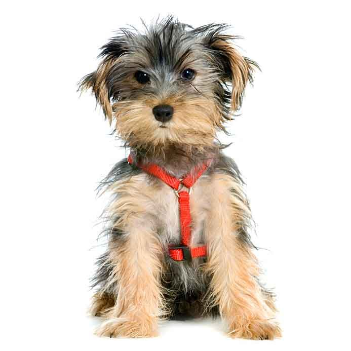 Hundreds Of Cute And Unique Small Male Dog Names To Choose From These Little Sounding