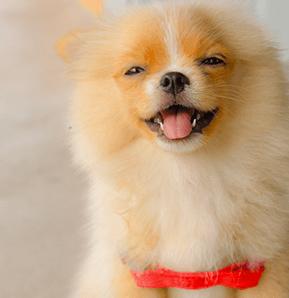 Dog Body Spa El Paso Texas Pet Body Spa El Paso Texas In 2020 Pet Day Pet Daycare Dog Grooming