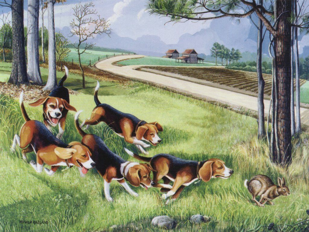 Hot Pursuit Jpg 1024 768 Beagle Art Hunting Painting Beagle