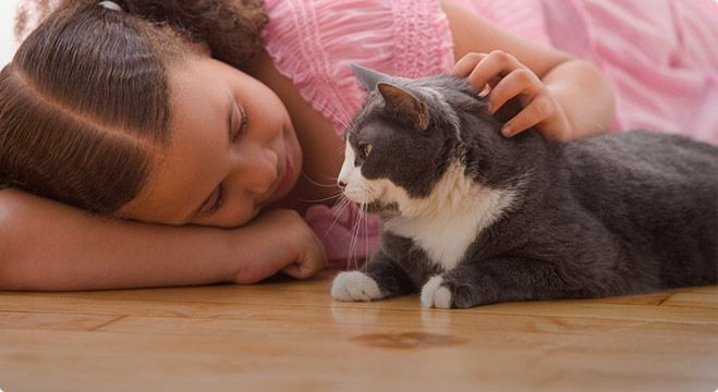 Popular Treatments And Average Costs For Veterinary Procedures Pet Insurance Reviews Cat Parenting Veterinary Care