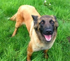 Adopt Zeva On Belgian Shepherd Dogs Apartment Puppy
