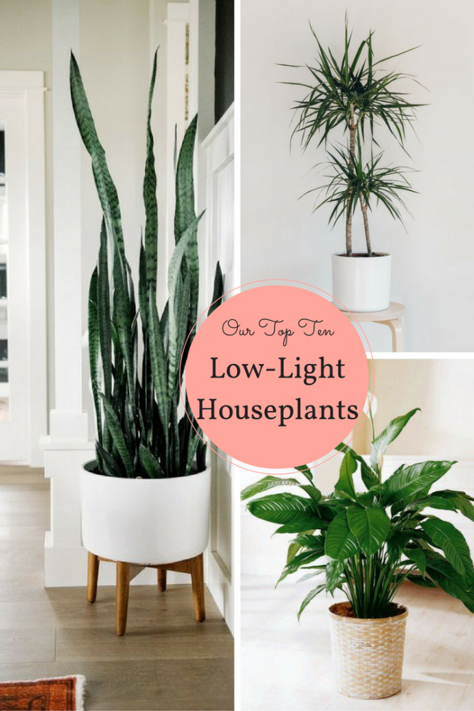 10 houseplants that don 39 t need sunlight apartment therapy pinterest pflanzen g stezimmer. Black Bedroom Furniture Sets. Home Design Ideas