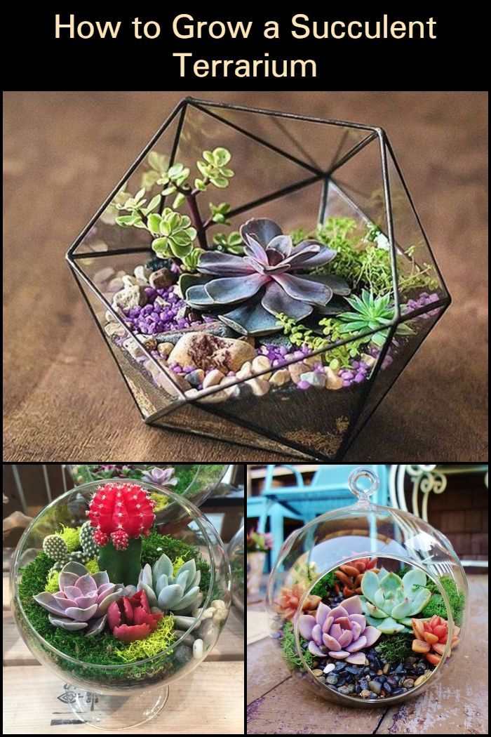 Photo of How to Grow a Succulent Terrarium