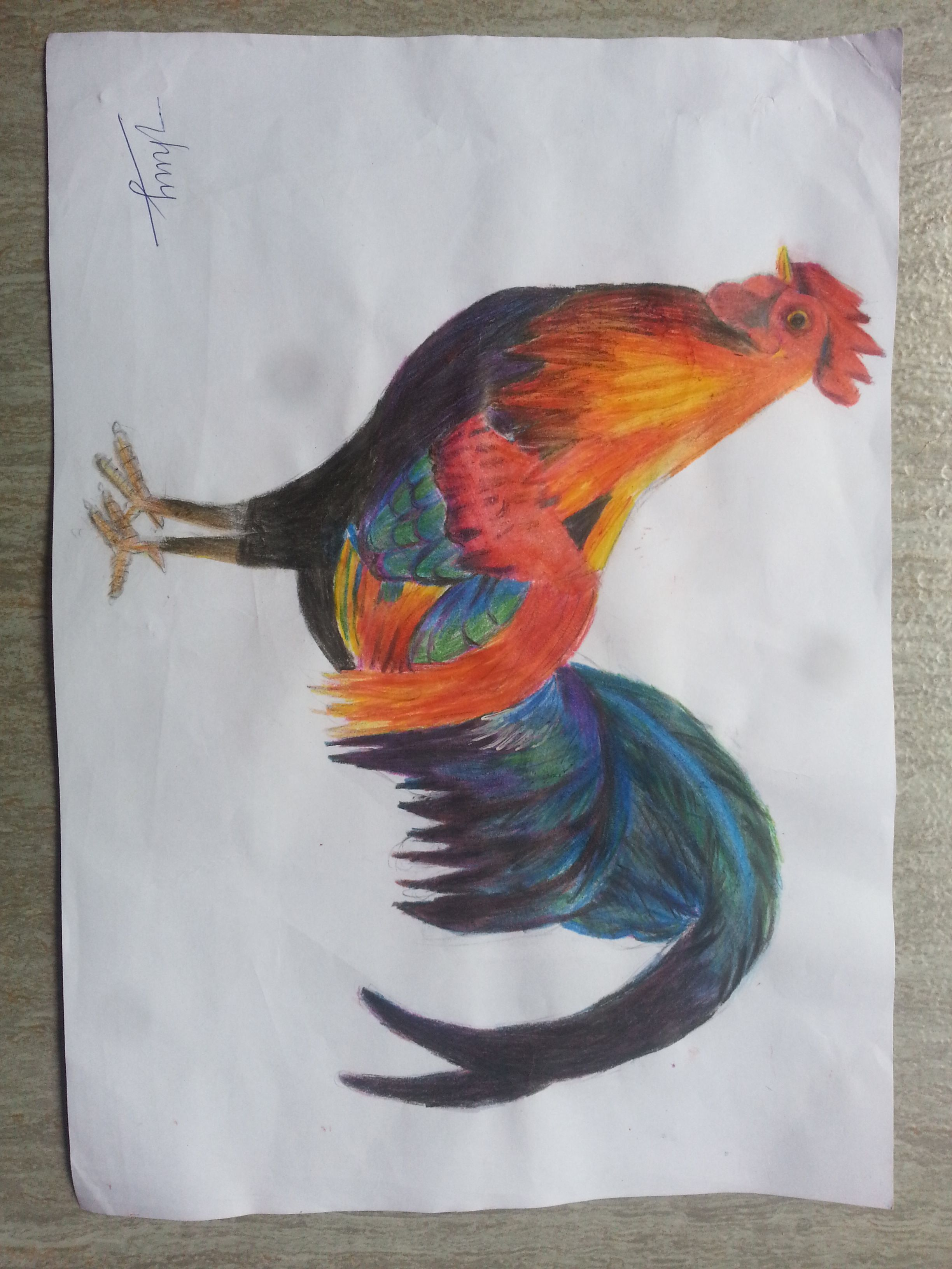 drawing a rooster nghệ thuật pinterest