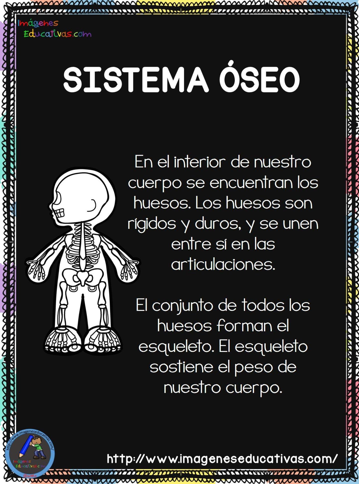 Cuaderno del Cuerpo Humano; Aparatos y Sistemas para trabajar en Primaria | Cuerpo  humano, Cuerpo humano para niños, Aparatos del cuerpo humano