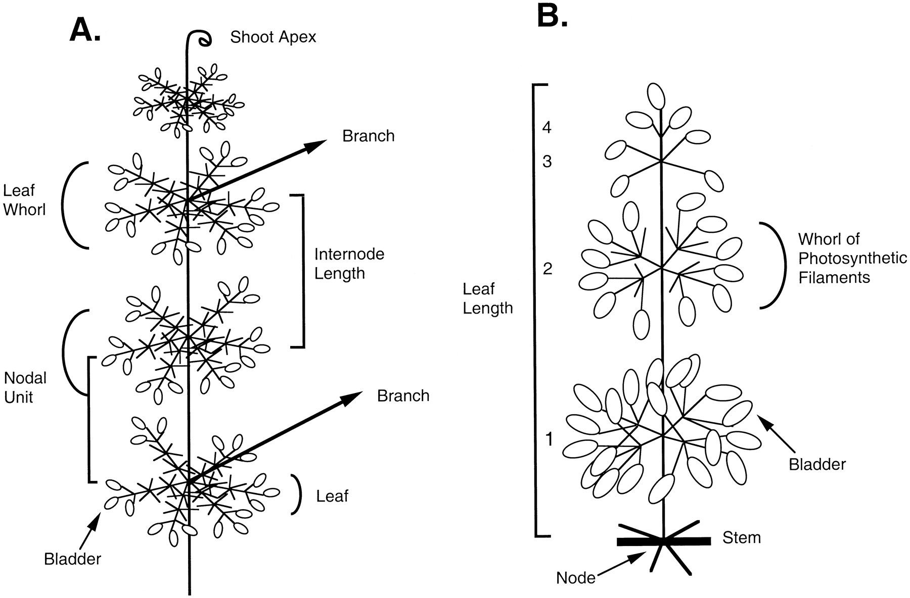 Medicinal Plant Diagram