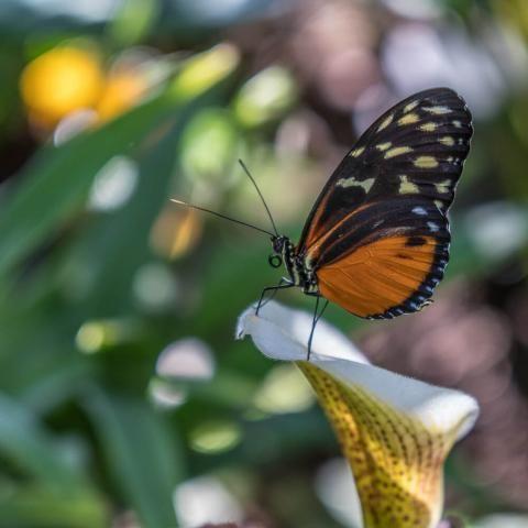 Berggarten Herrenhauser Garten In Hannover Parkanlage Parkanlage Pflanzen Garten Bepflanzen