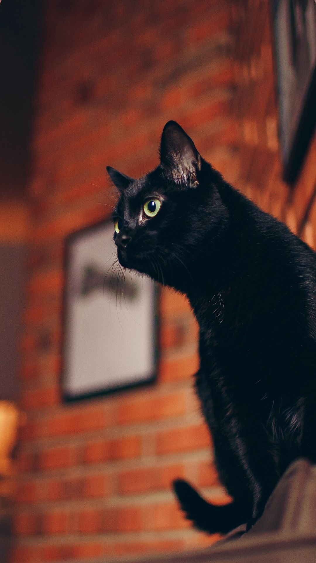Iphone Black Cat Wallpaper In 2020 Cat Wallpaper Black Cat Aesthetic Cute Cat Wallpaper