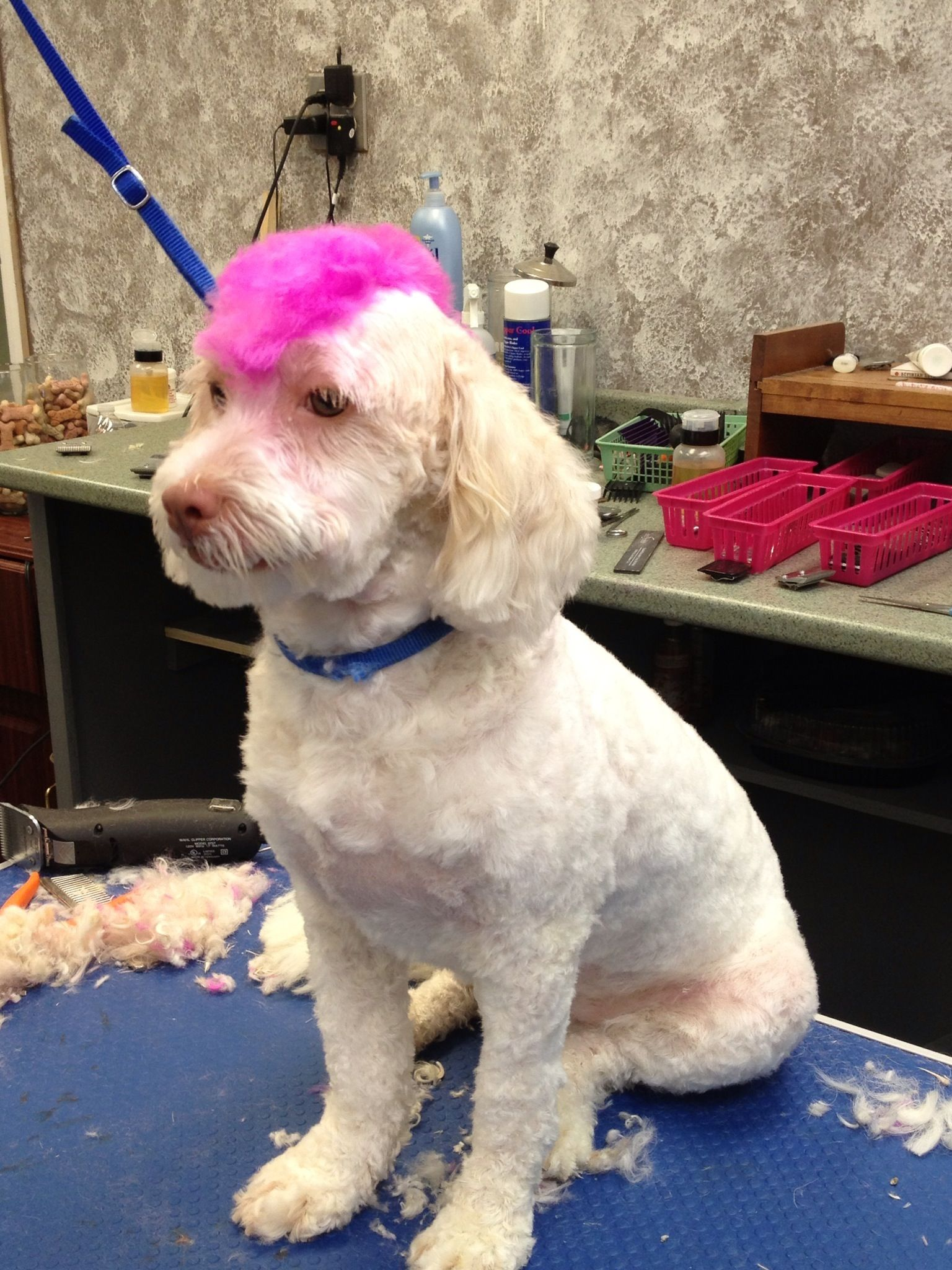Dog grooming pink mohawk love my job pinterest dog pet dog grooming pink mohawk solutioingenieria Gallery