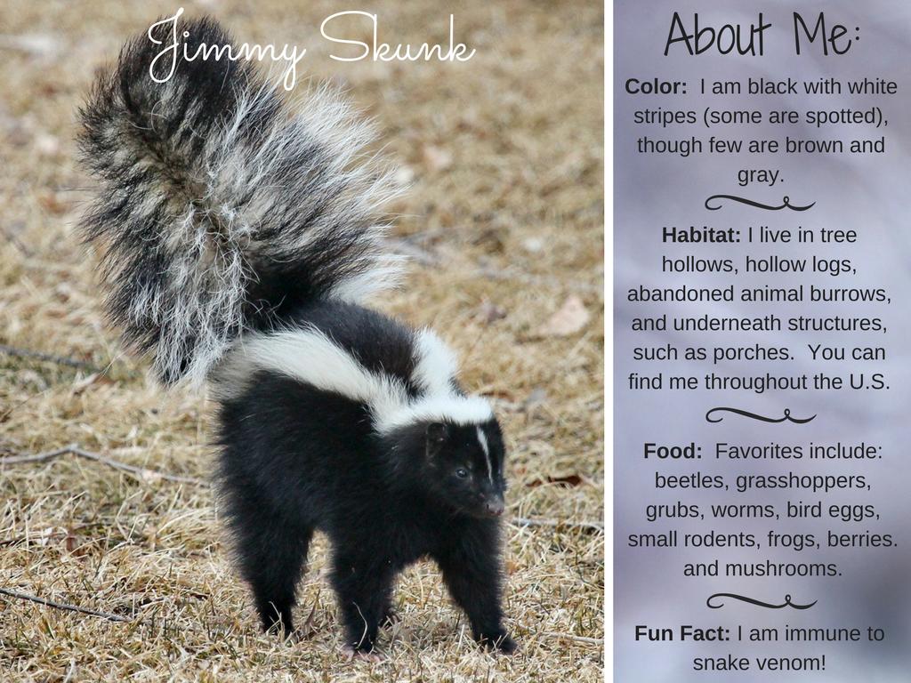 Jimmy Skunk