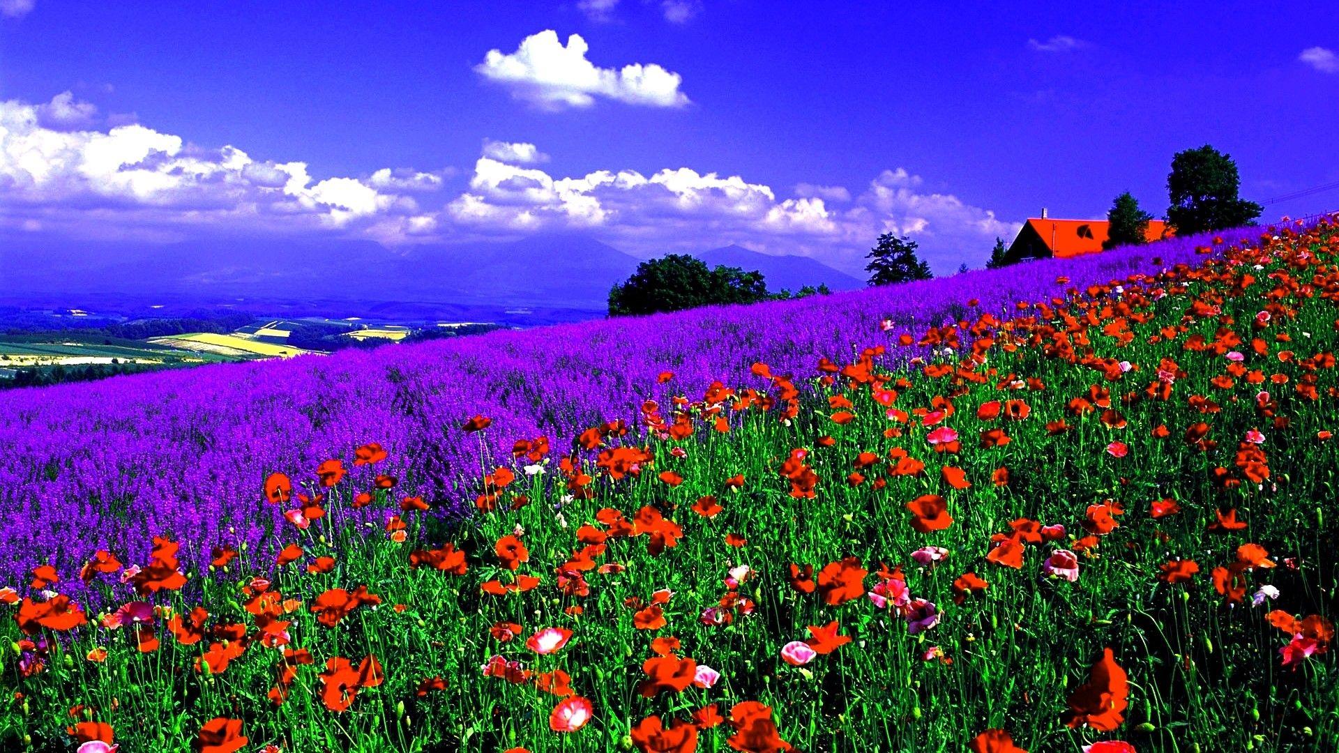 Terra Natura Paesaggi Natura Fiori Primavera Sfondo